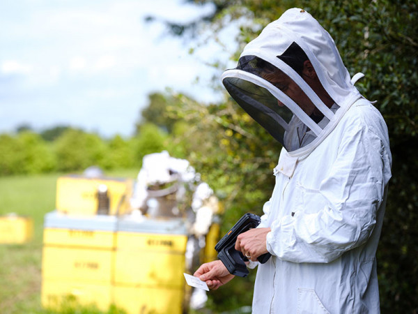 Person in bee suit using a hand scanner.